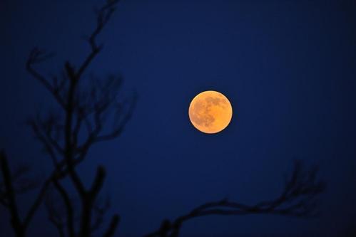 肥後国 月.jpg